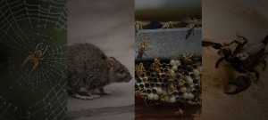 Pest Control Elimination and Prevention - Rats, Wasps, and More - Croach
