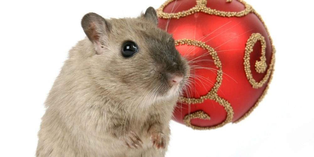 House Mouse Control - Croach - Kirkland, WA - Brown Mouse With Red Christmas Bulb