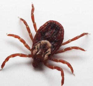 Pest Control Phoenix AZ Croach Tick Phobias